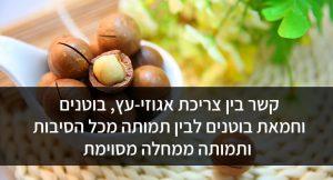 קשר בין צריכת אגוזי-עץ, בוטנים וחמאת בוטנים לבין תמותה מכל הסיבות ותמותה ממחלה מסוימת