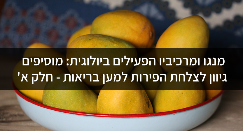 מנגו ומרכיביו הפעילים ביולוגית: מוסיפים גיוון לצלחת הפירות למען בריאות