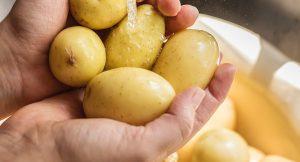 תפוחי-אדמה ובריאות – חלק ב'