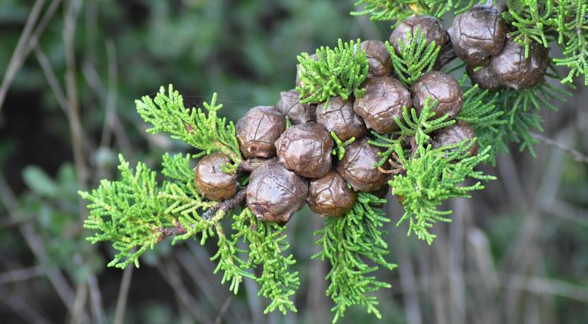 מה הקשר בין תזונה לבין קדחת השחת (אלרגיות עונתיות)?